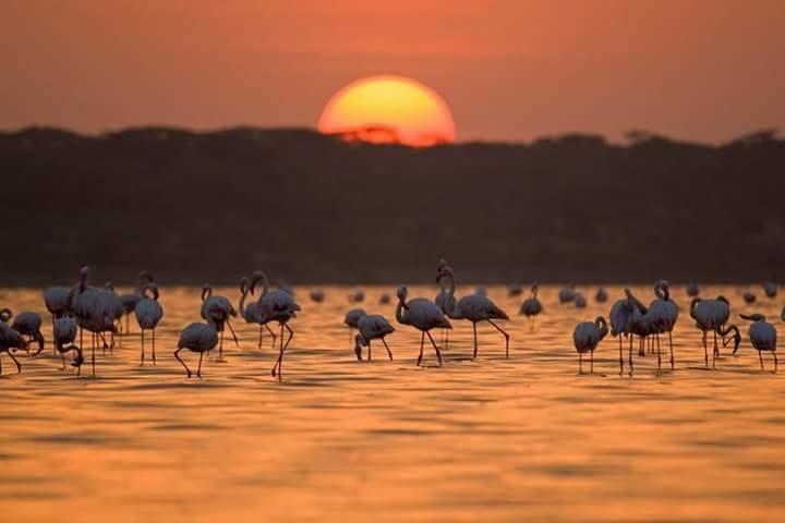 Tanzania Lake Manyara.jpg