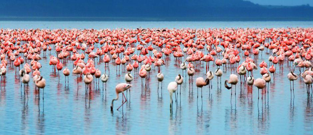 Tanzania Lake Manyara 2.jpg