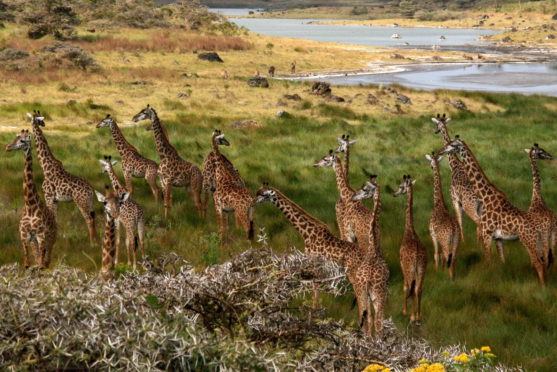 Tanzania Arusha NP 5.jpg