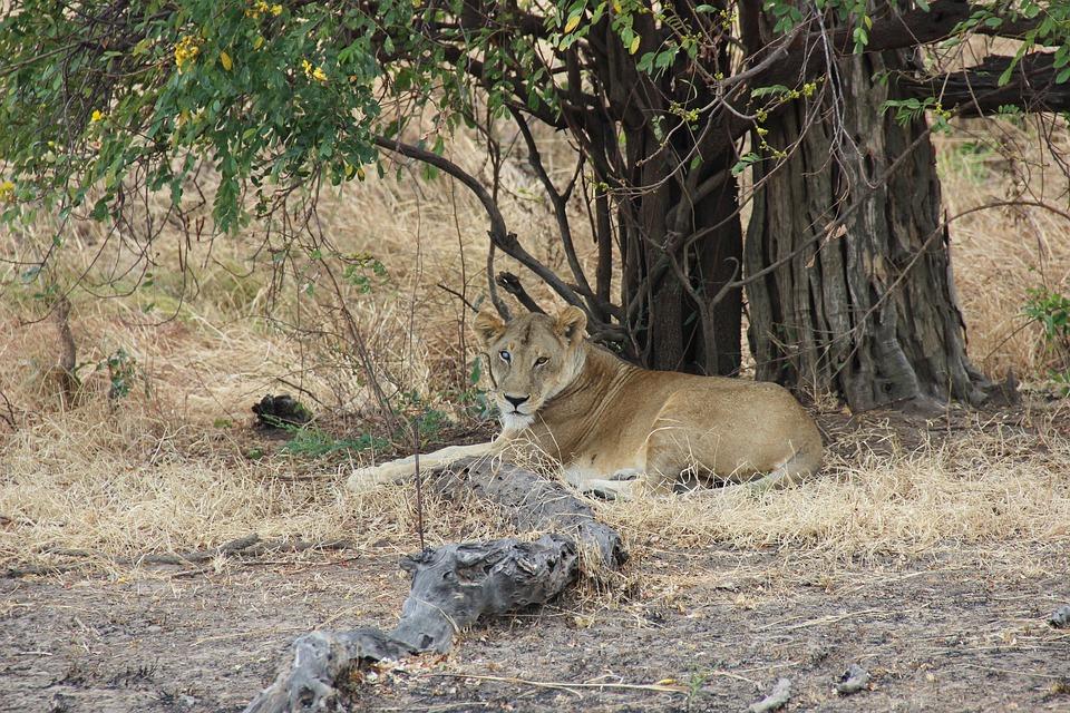 Tanzania Mikumi 3.jpg