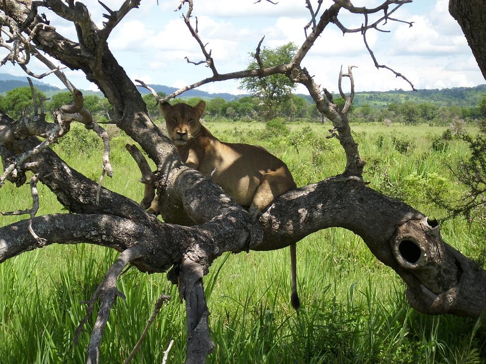 Tanzania Mikumi 4.jpg