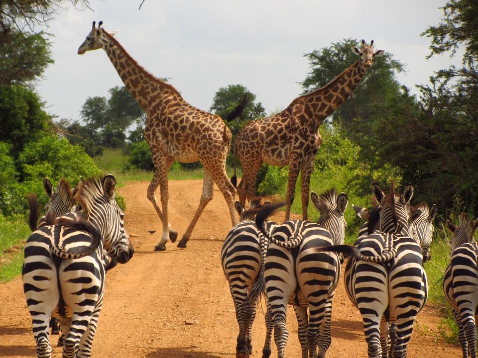 Tanzania Mikumi 5.jpg