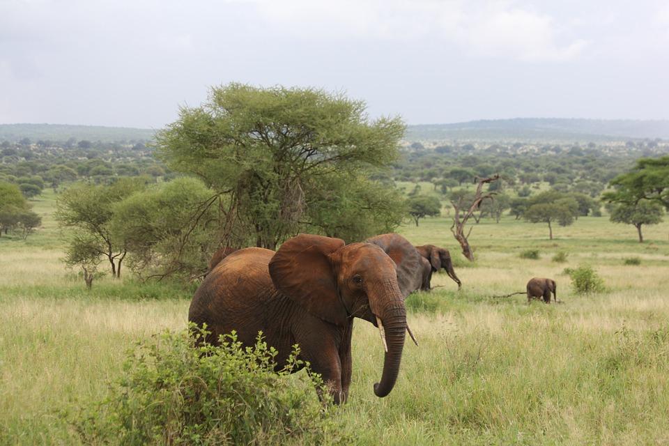 Tanzania Tarangire 5.jpg