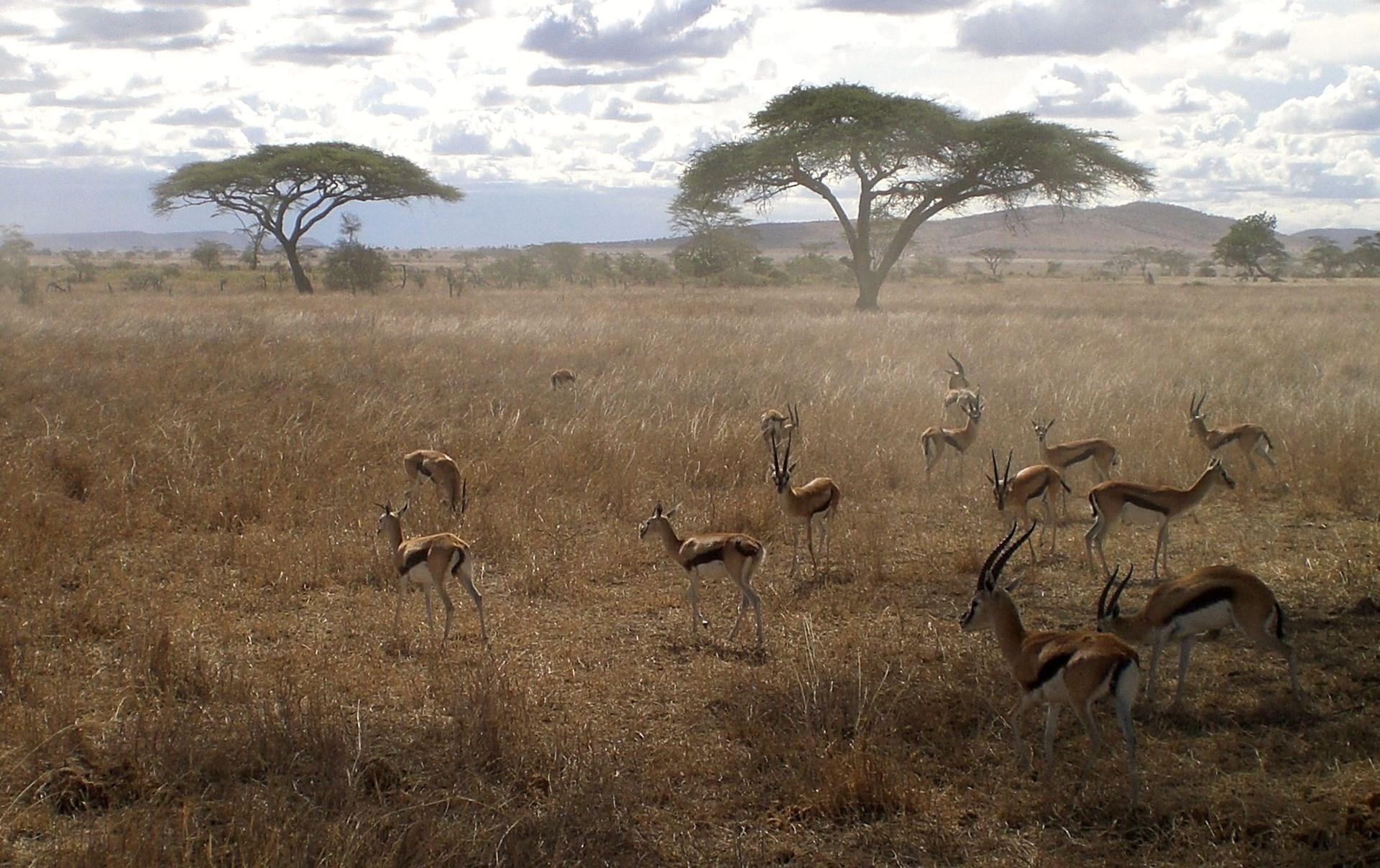 Tanzania Tarangire 8.jpg