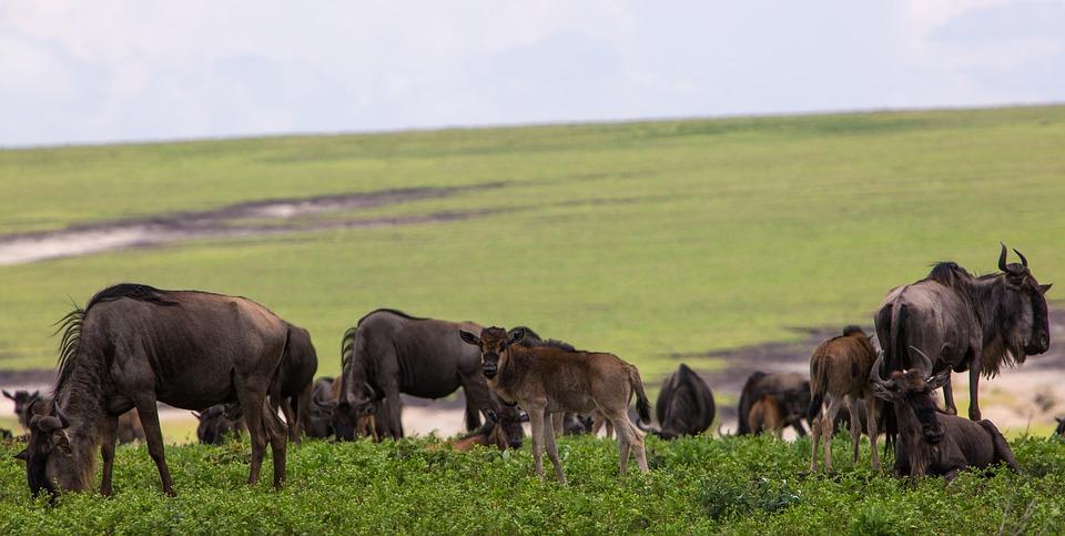 Tanzania Ngorongoro 1.jpg