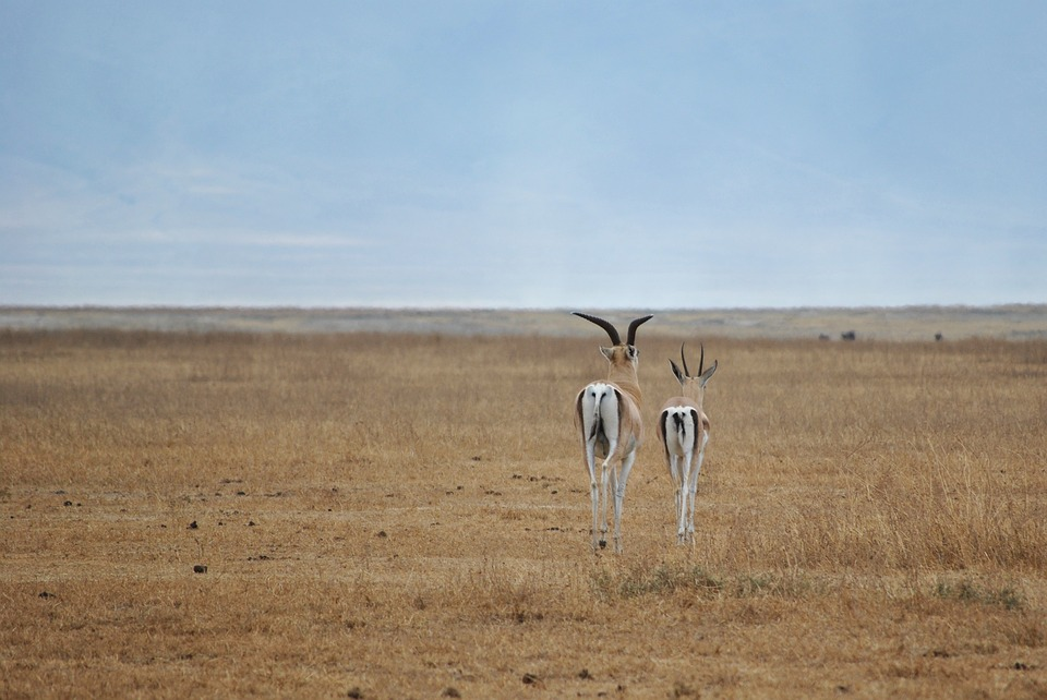 Tanzania Ngorongoro 3.jpg