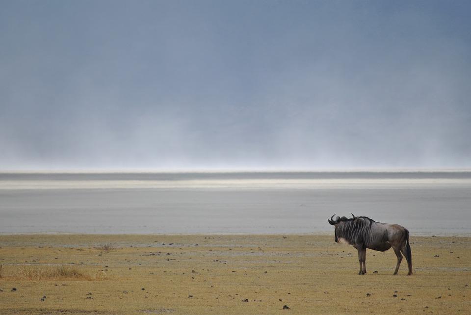 Tanzania Ngorongoro 7.jpg