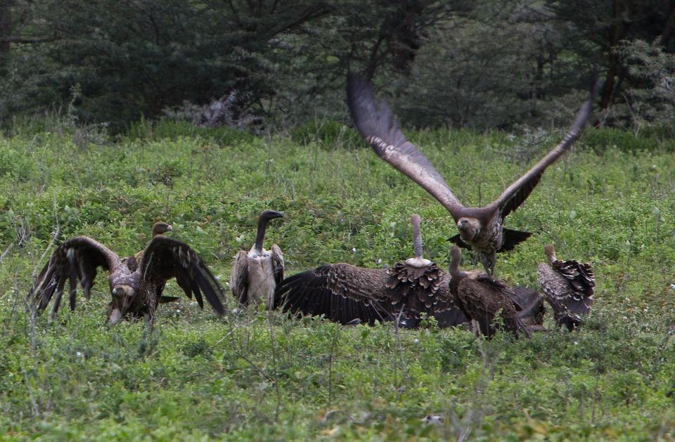 Tanzania Ngorongoro 6.jpg