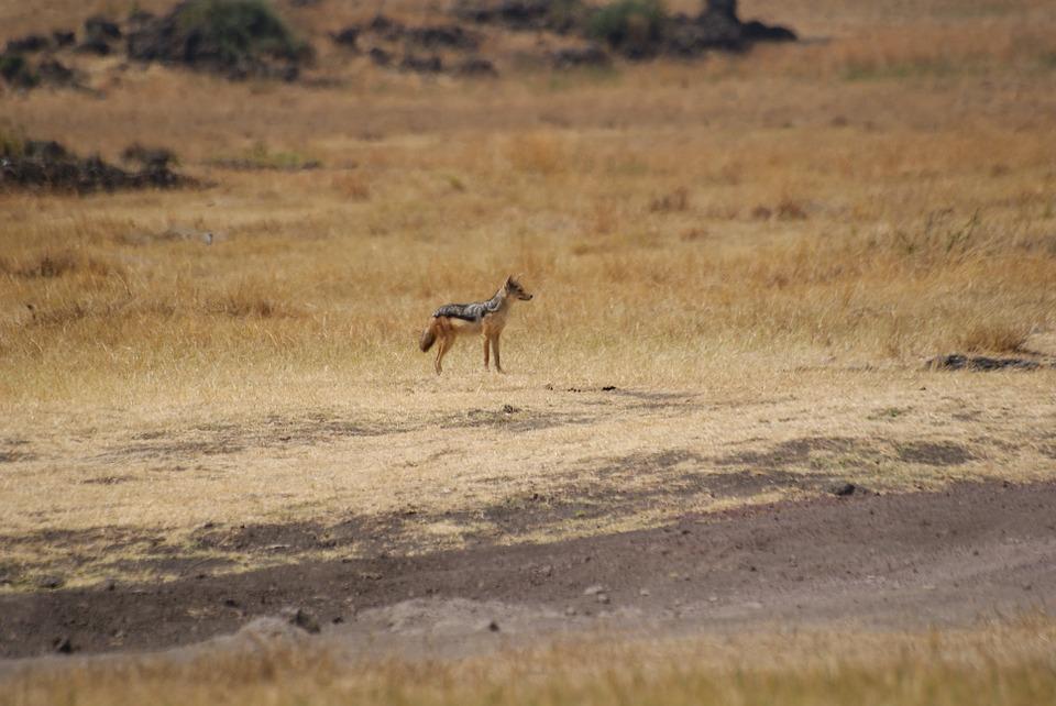 Tanzania Ngorongoro 11.jpg