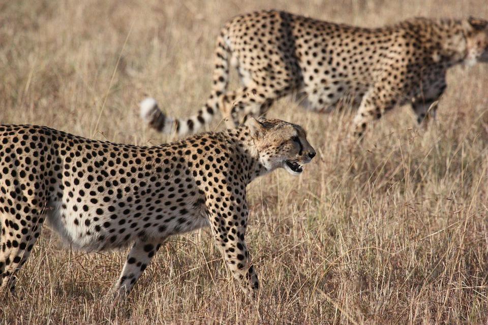 Tanzania Serengeti 4.jpg