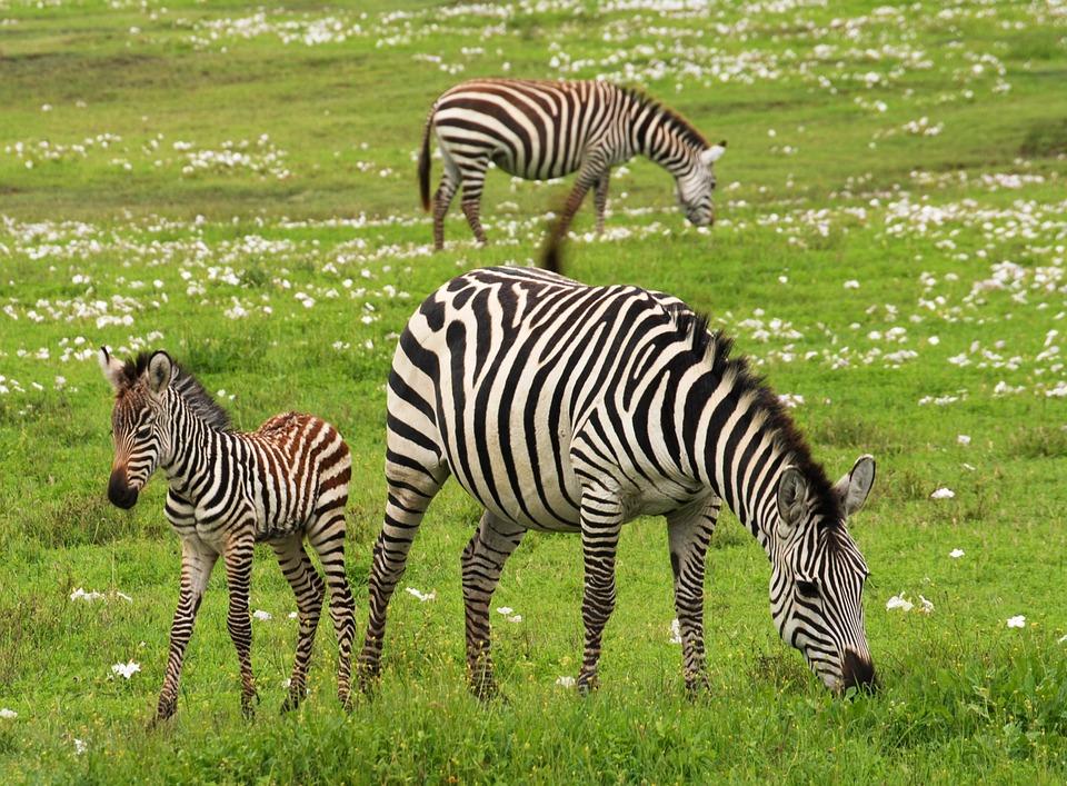 Tanzania Serengeti 5.jpg