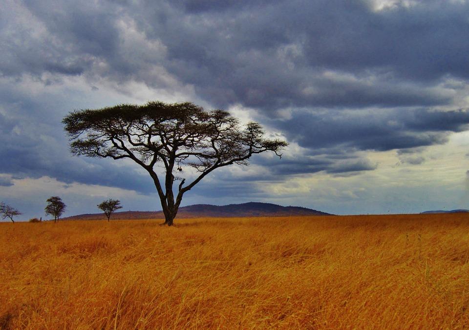 Tanzania Serengeti 18.jpg