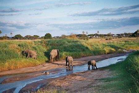 Tarangire National Park >>