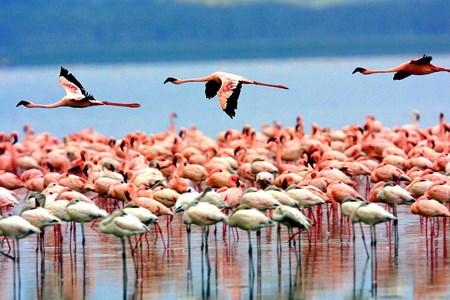 Lake Manyara National Park >>