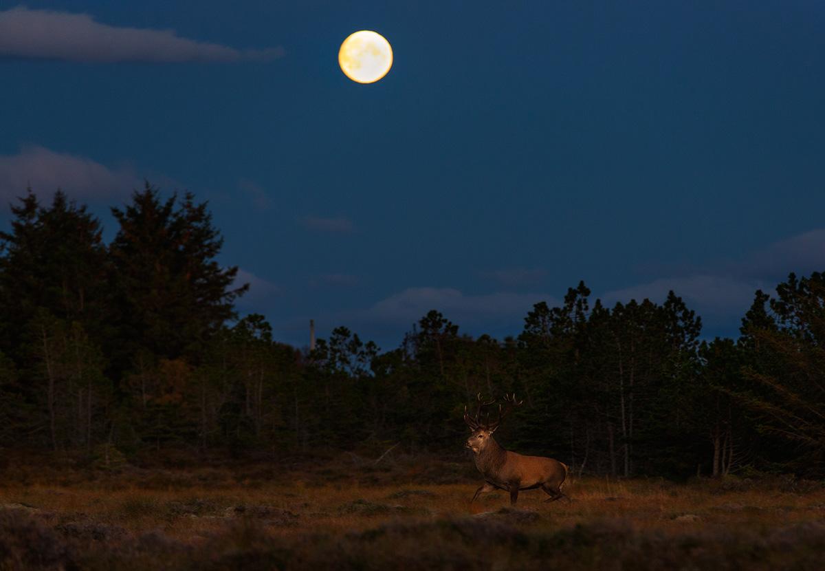 Norway wildlife 6.jpg
