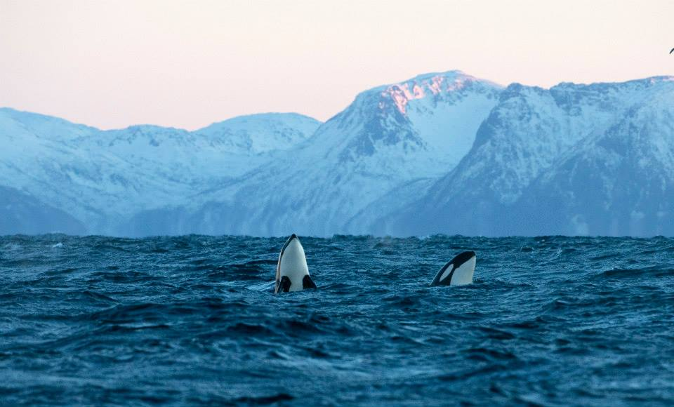 Norway Wildlife 9.jpg