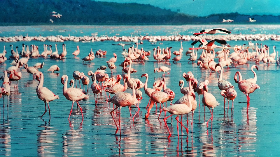 Lake Nakuru National Park >>