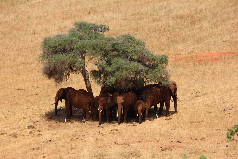 Tsavo East National Park >>