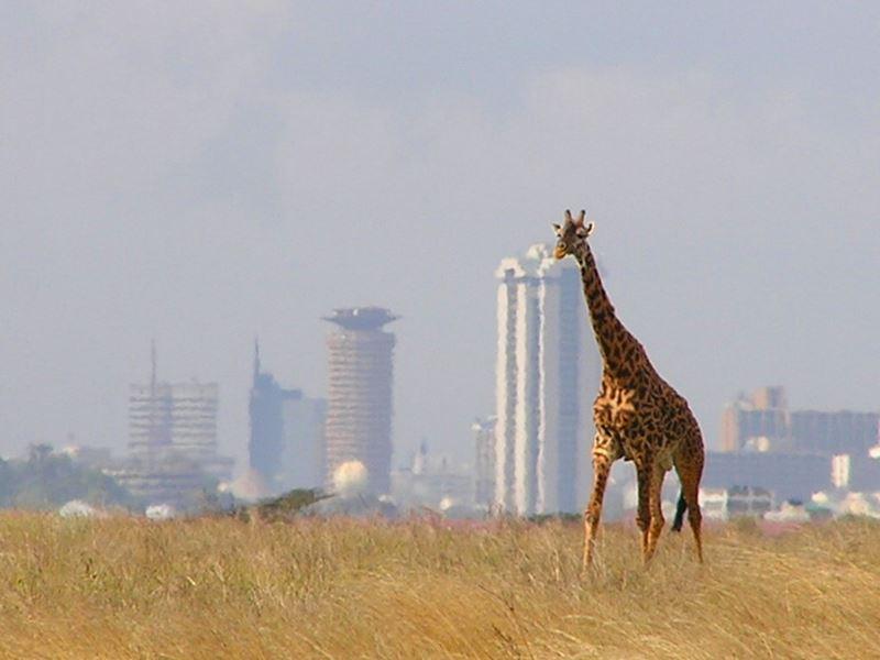 Nairobi National Park >>