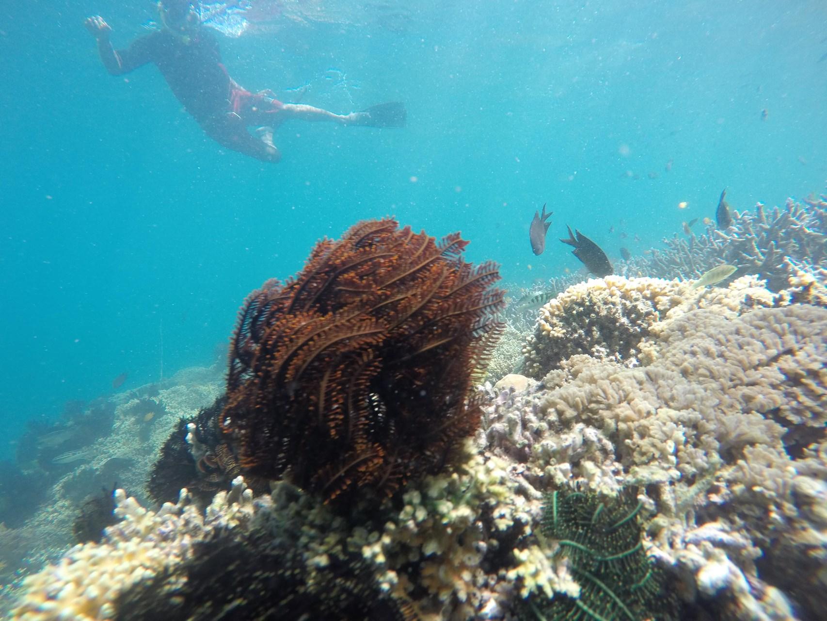 Lombok Short Escape 5.jpg