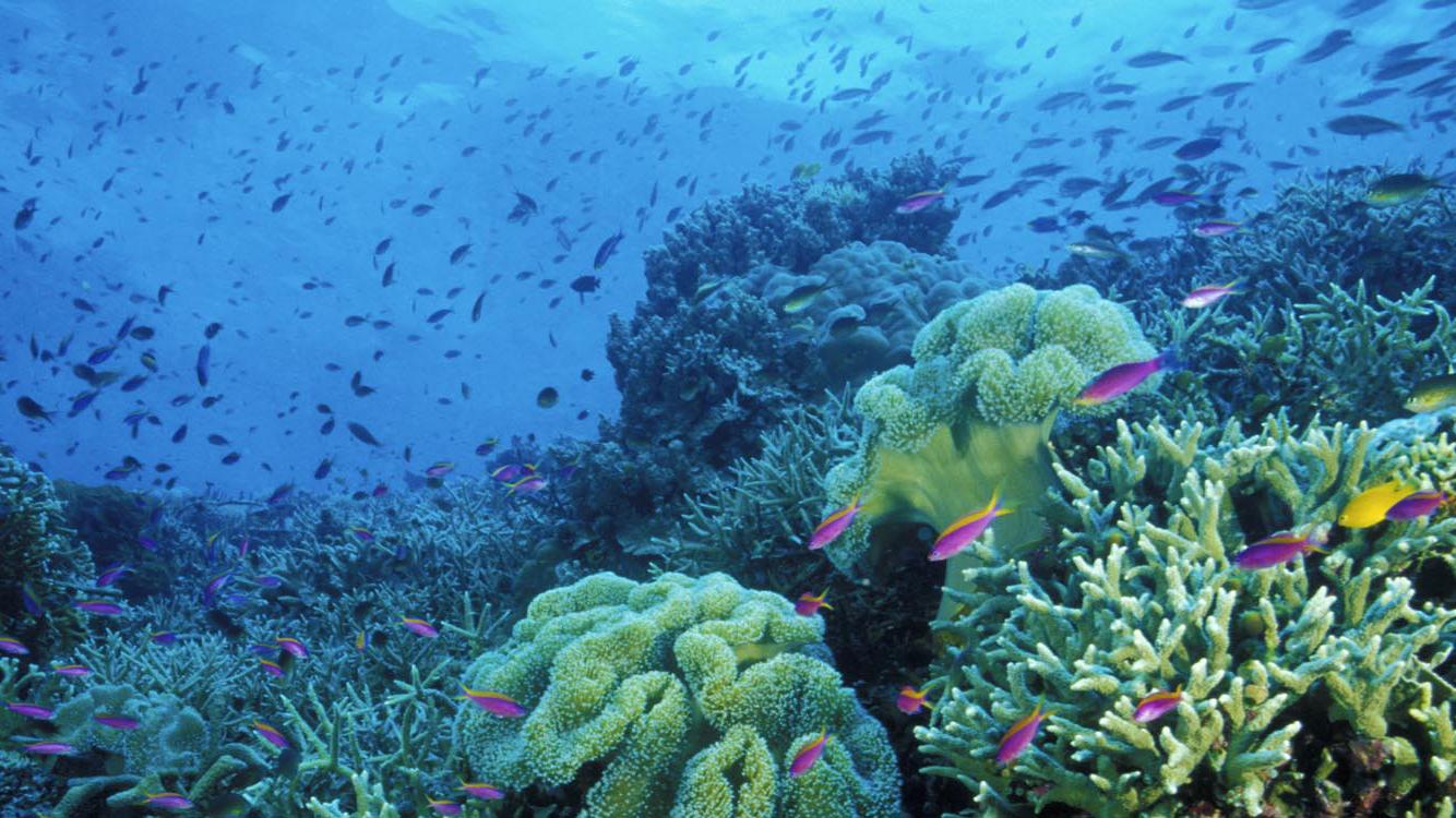 Sulawesi discover toraja 5.jpg