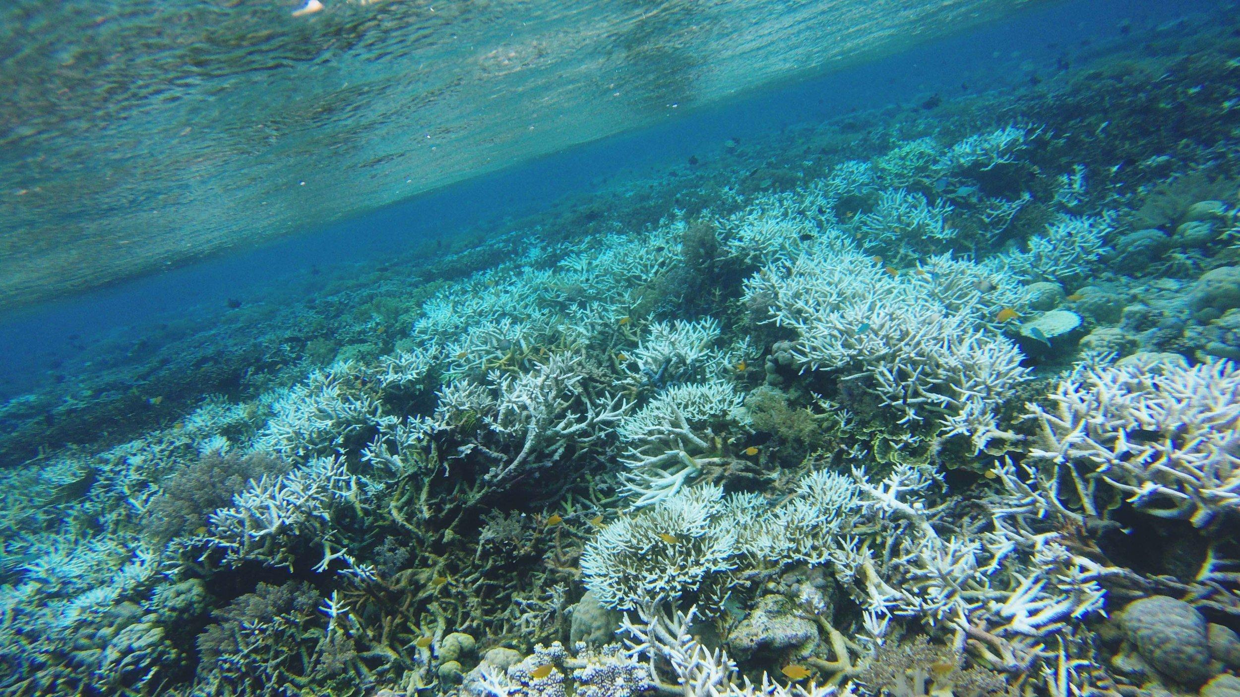Sulawesi soul of wakatobi 2.jpg