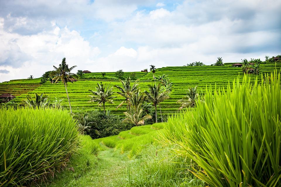 Indonesia I.jpg