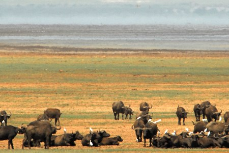 Tanzania Lake Manyara 5.jpg