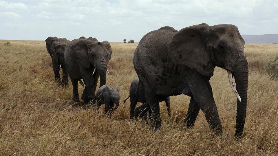 Tanzania Serengeti 3.jpg