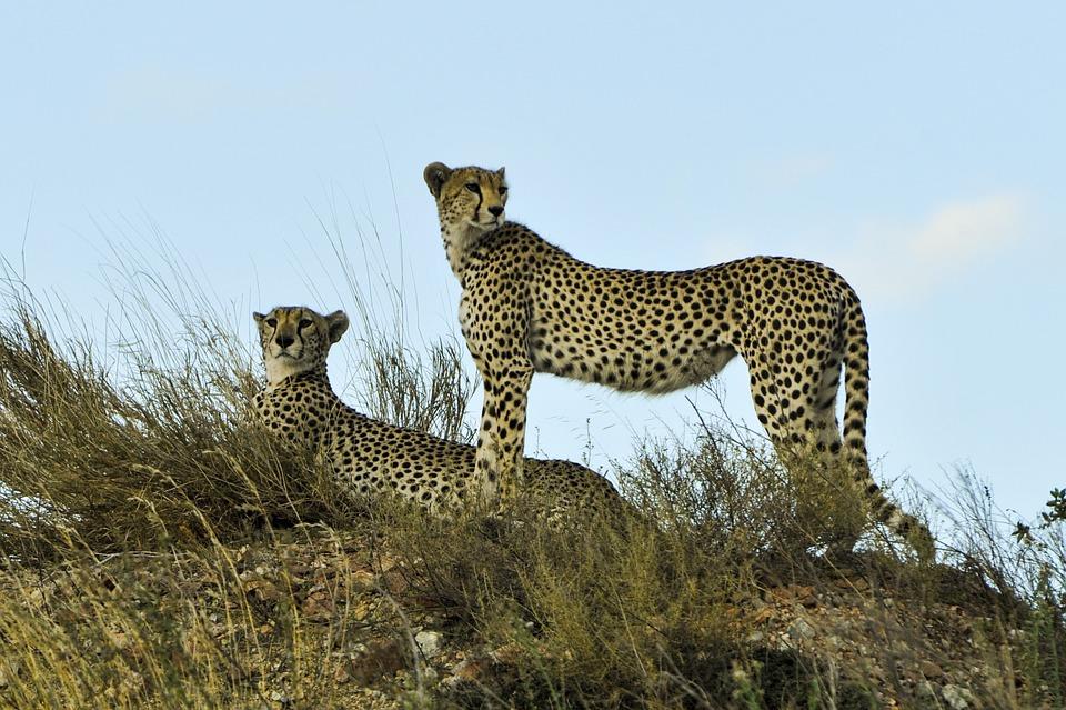 Tanzania Serengeti 15.jpg