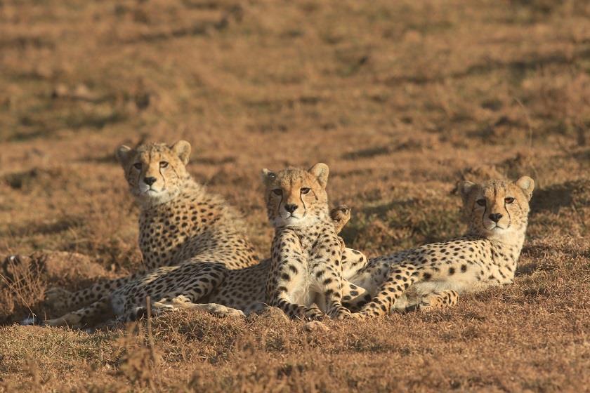 Tanzania Tarangire 13.jpg
