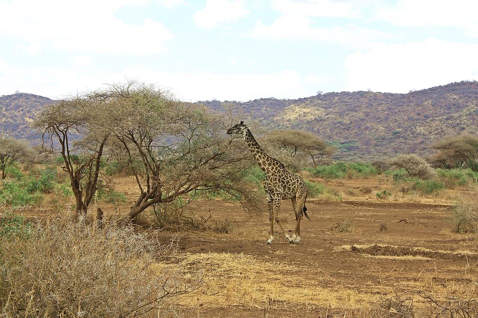 Tanzania Ngorongoro 15.jpg