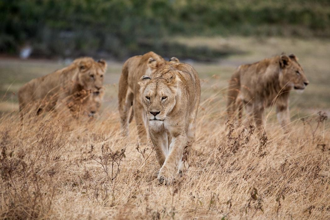 Ngorongoro 2.jpg