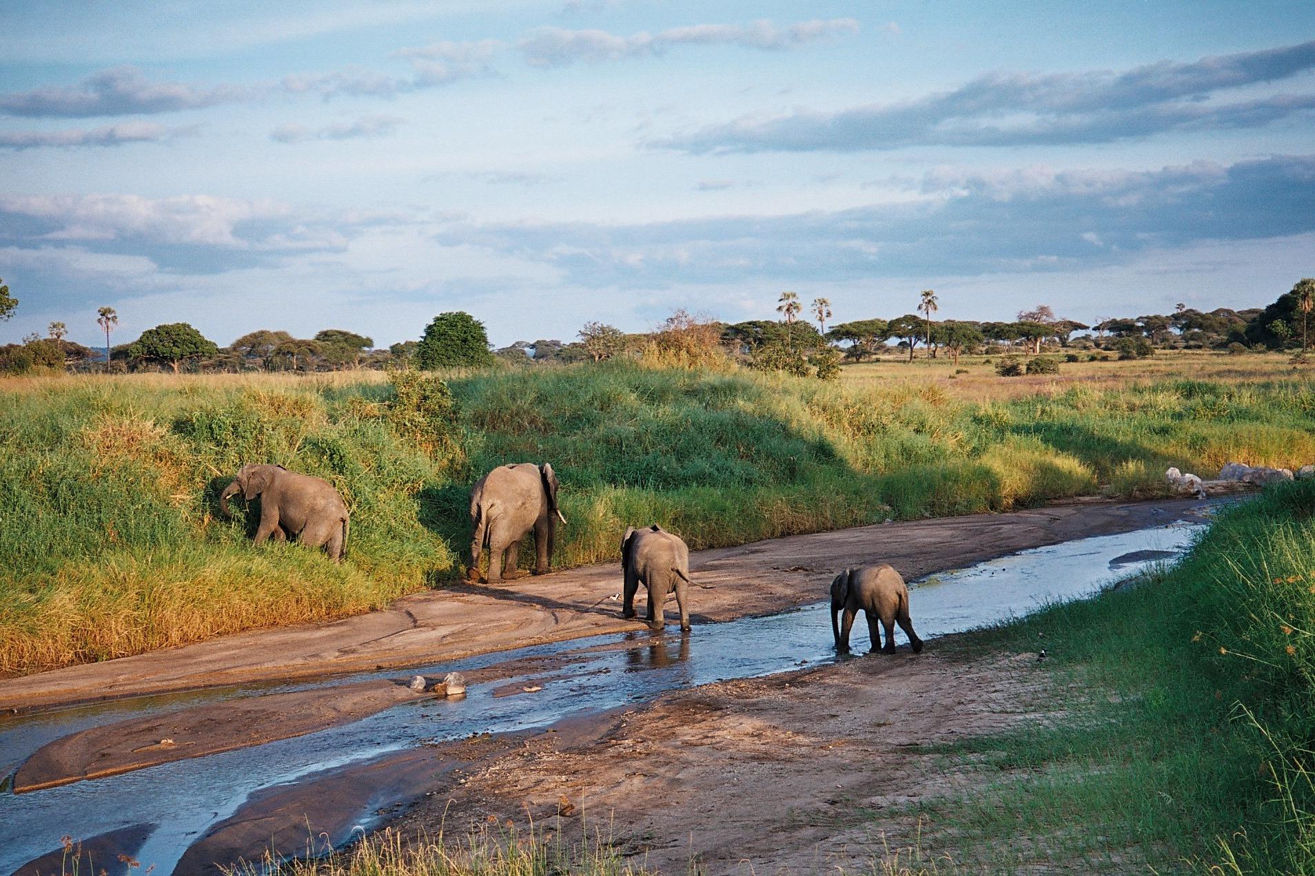 Tanzania tarangire river.jpg
