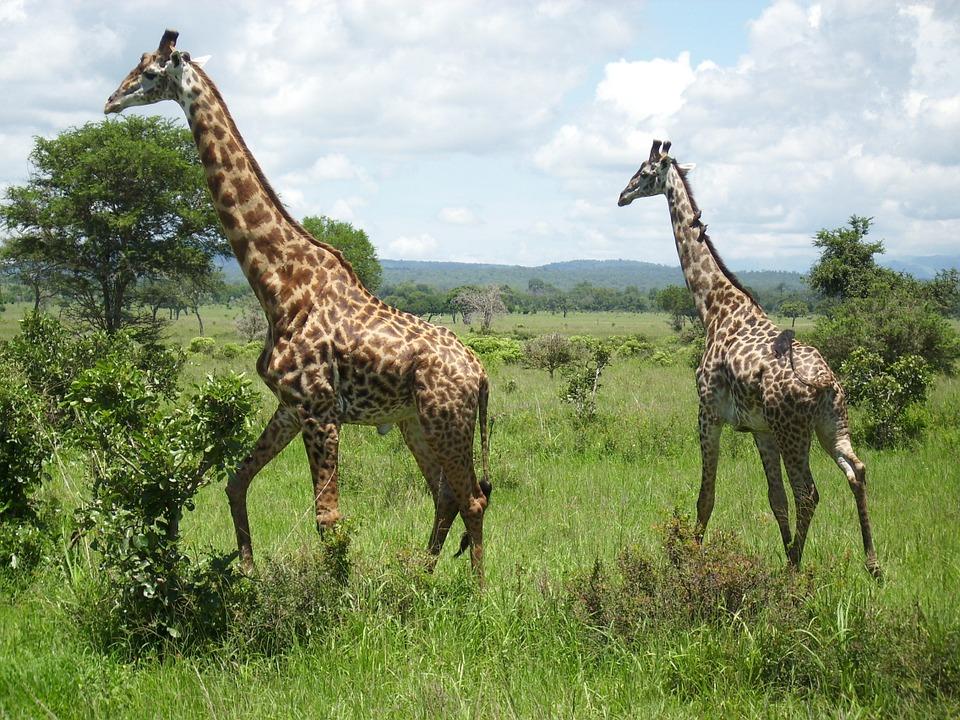Tanzania Mikumi.jpg