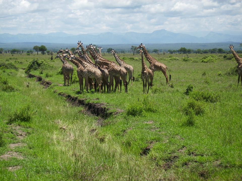 Tanzania Mikumi 2.jpg