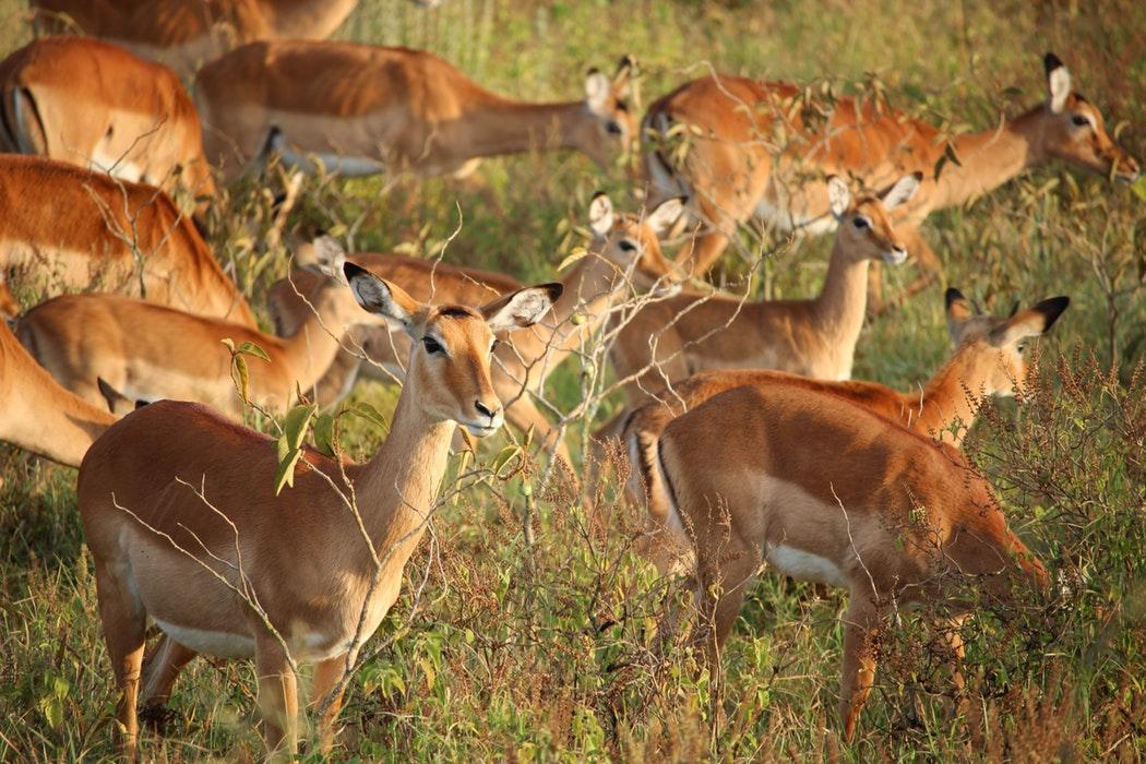 Kenya Lake Nakuru 3.jpg