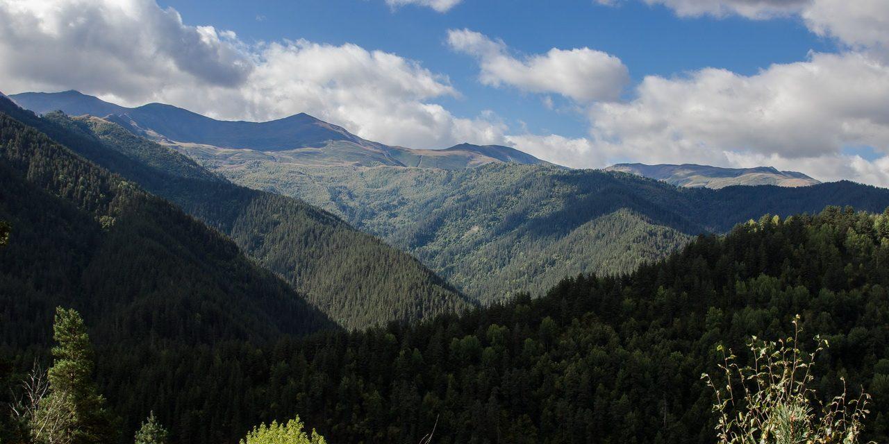 Georgia Svaneti Forest.jpg