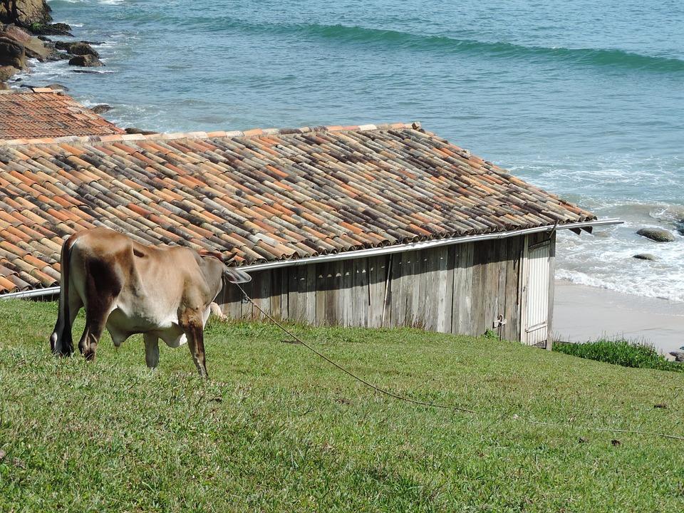Brazil Santa Catarina 10.jpg
