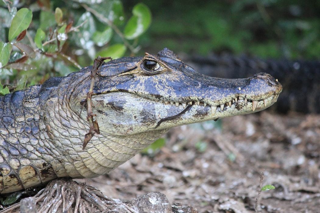 Brazil Pantanal.jpg