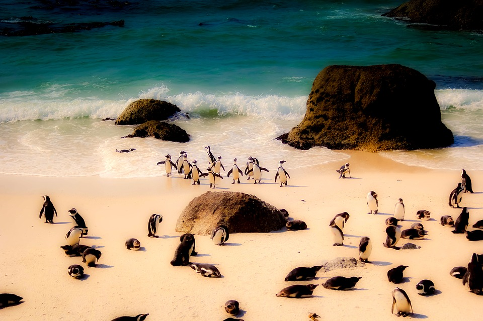 South Africa penguins.jpg