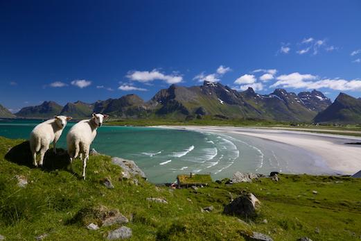 Hiking in Lofoten Islands