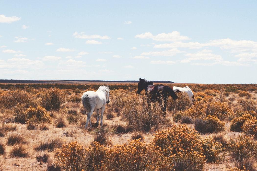 Patagonia slide 7.jpg