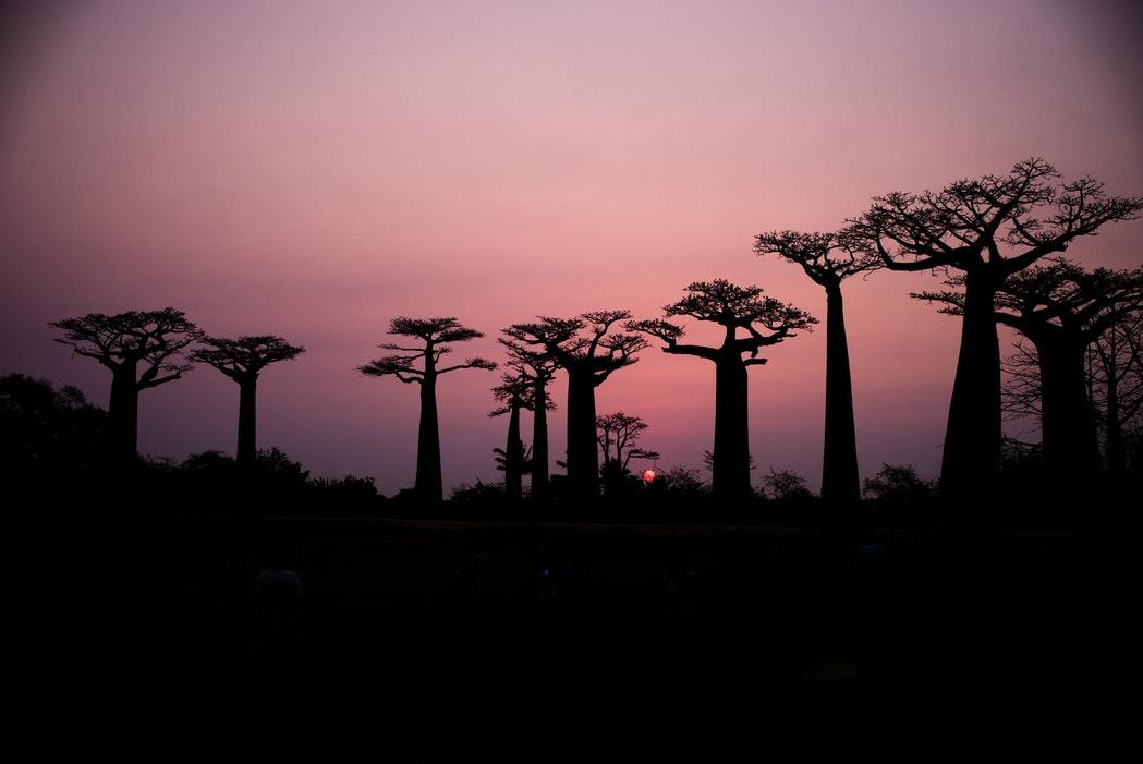 See Baobab Alley