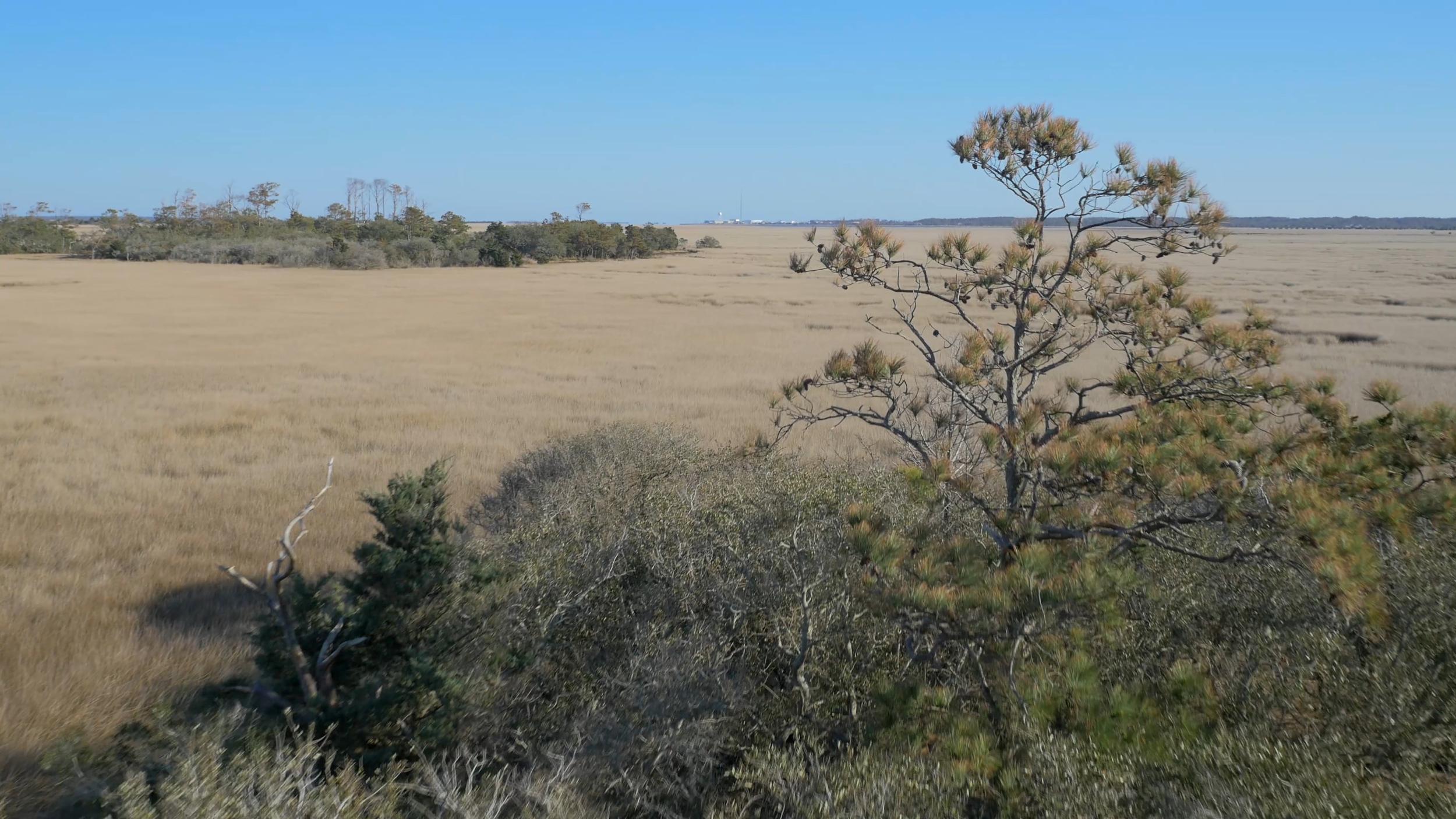 marsh tree.jpg