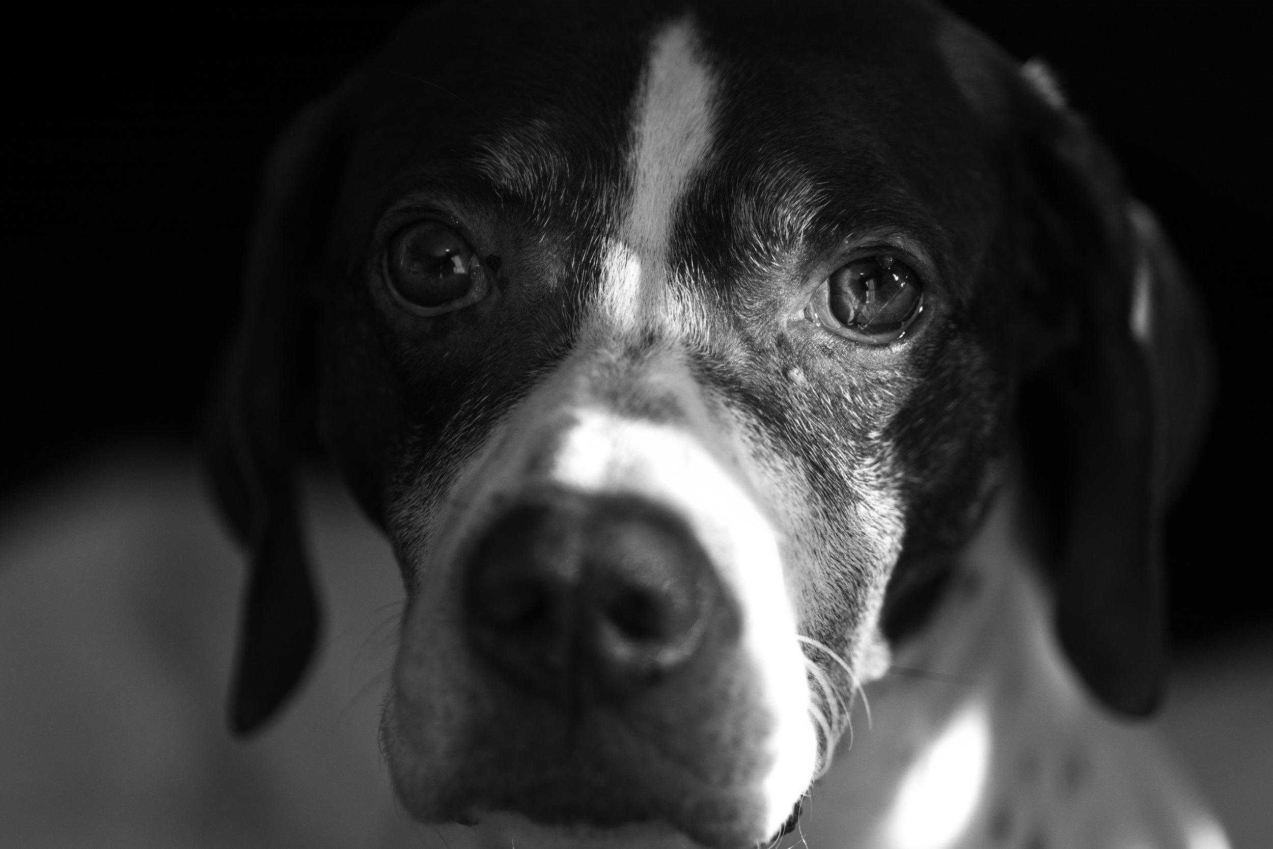dogs (1 of 1)-54.jpg