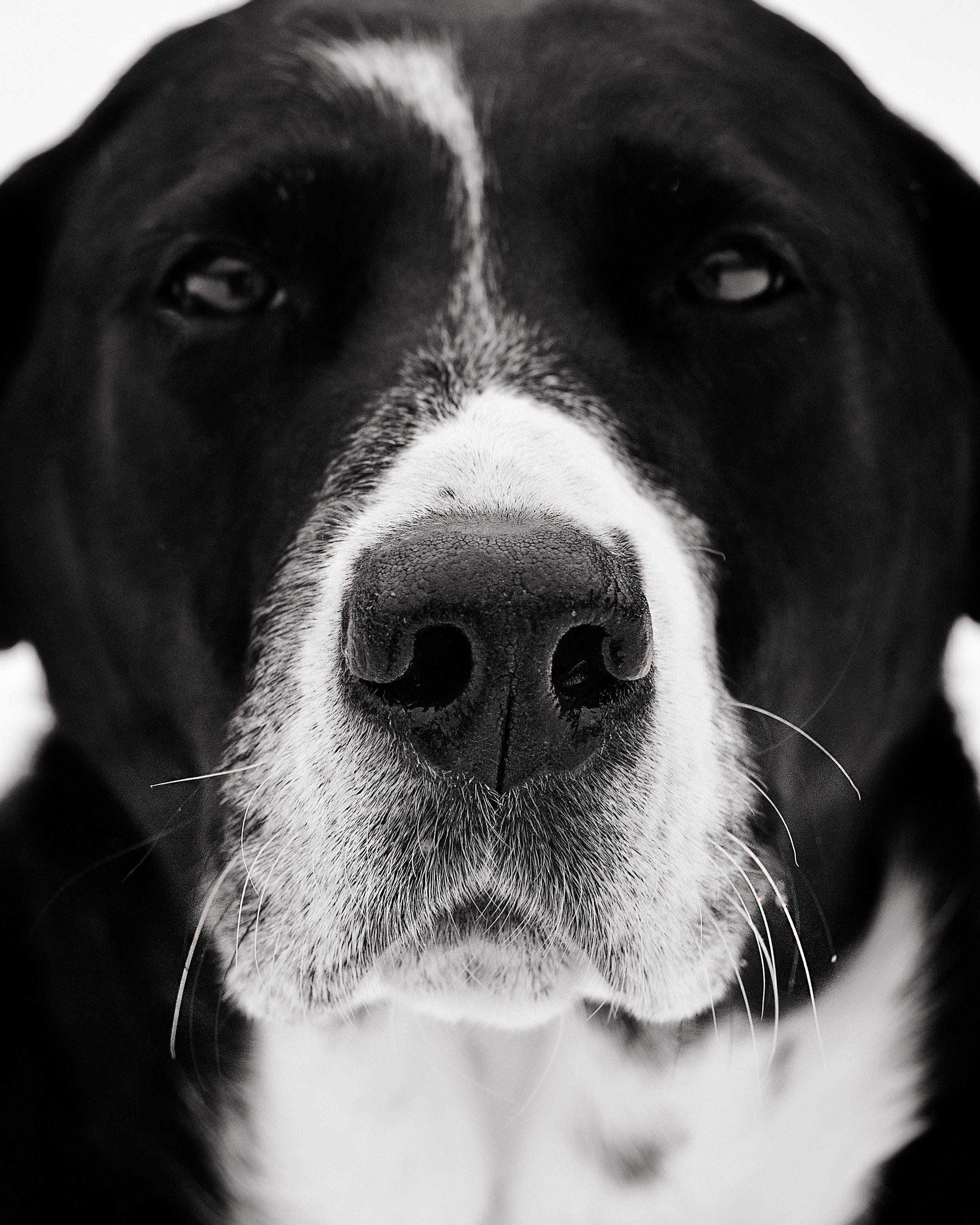 dogs (1 of 1)-66.jpg
