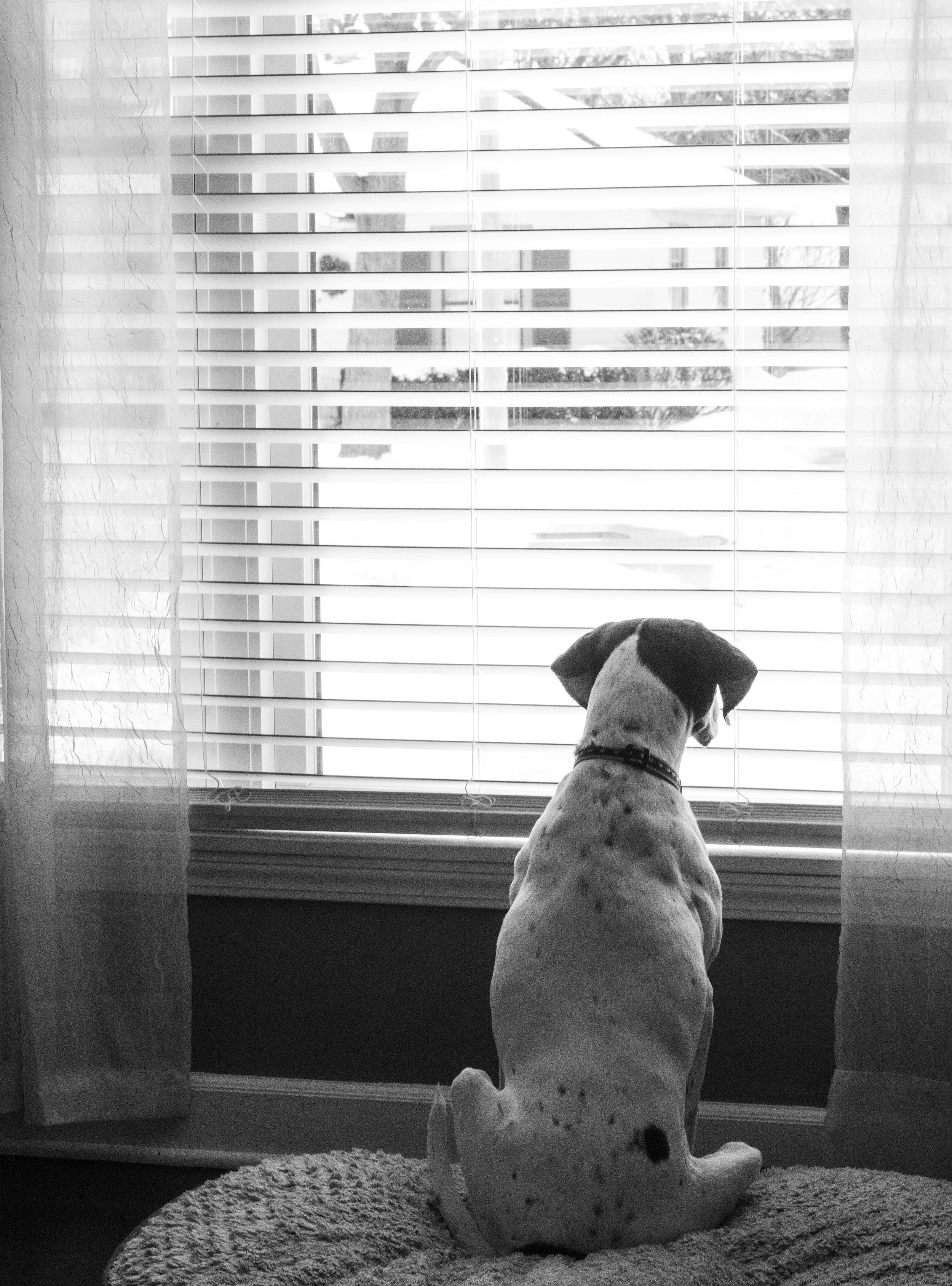 dogs (1 of 1)-10.jpg