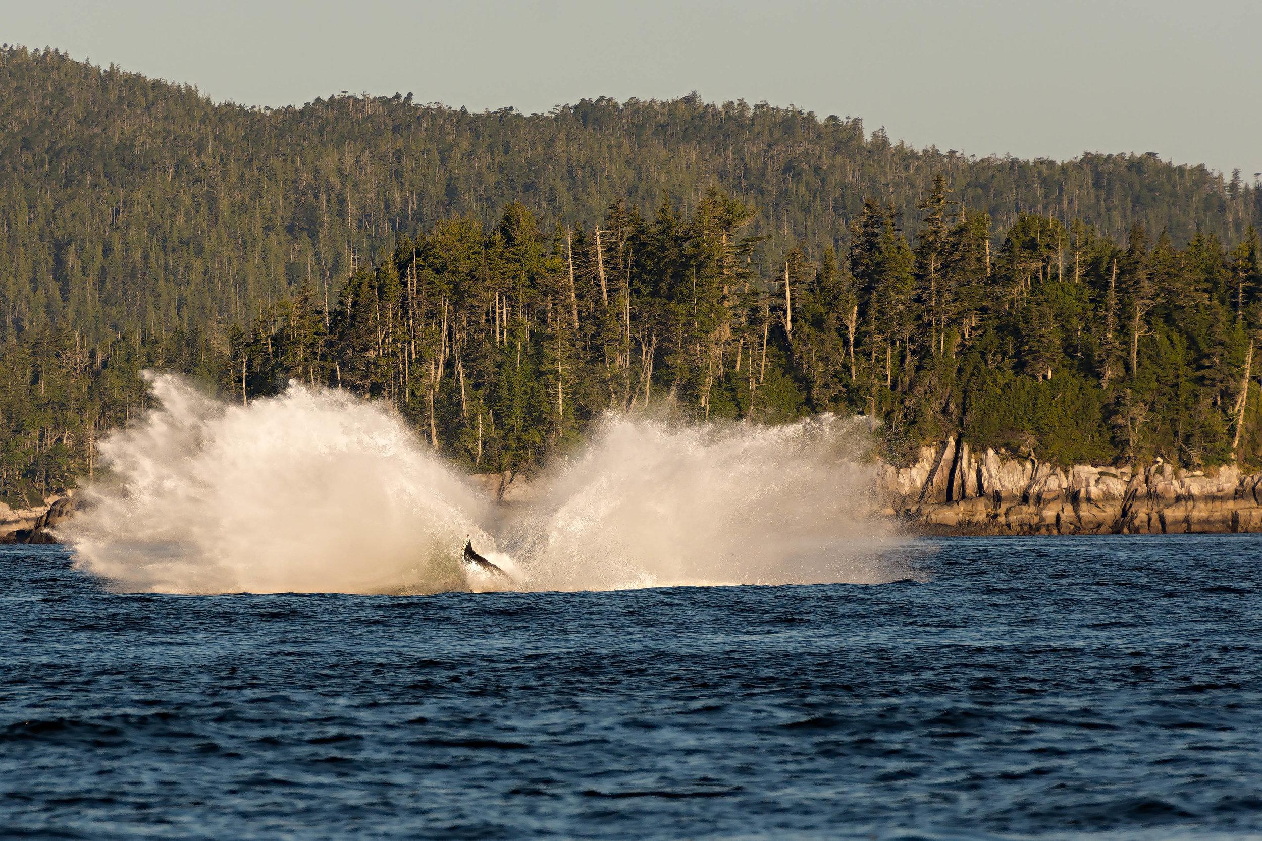 And a huge splash!