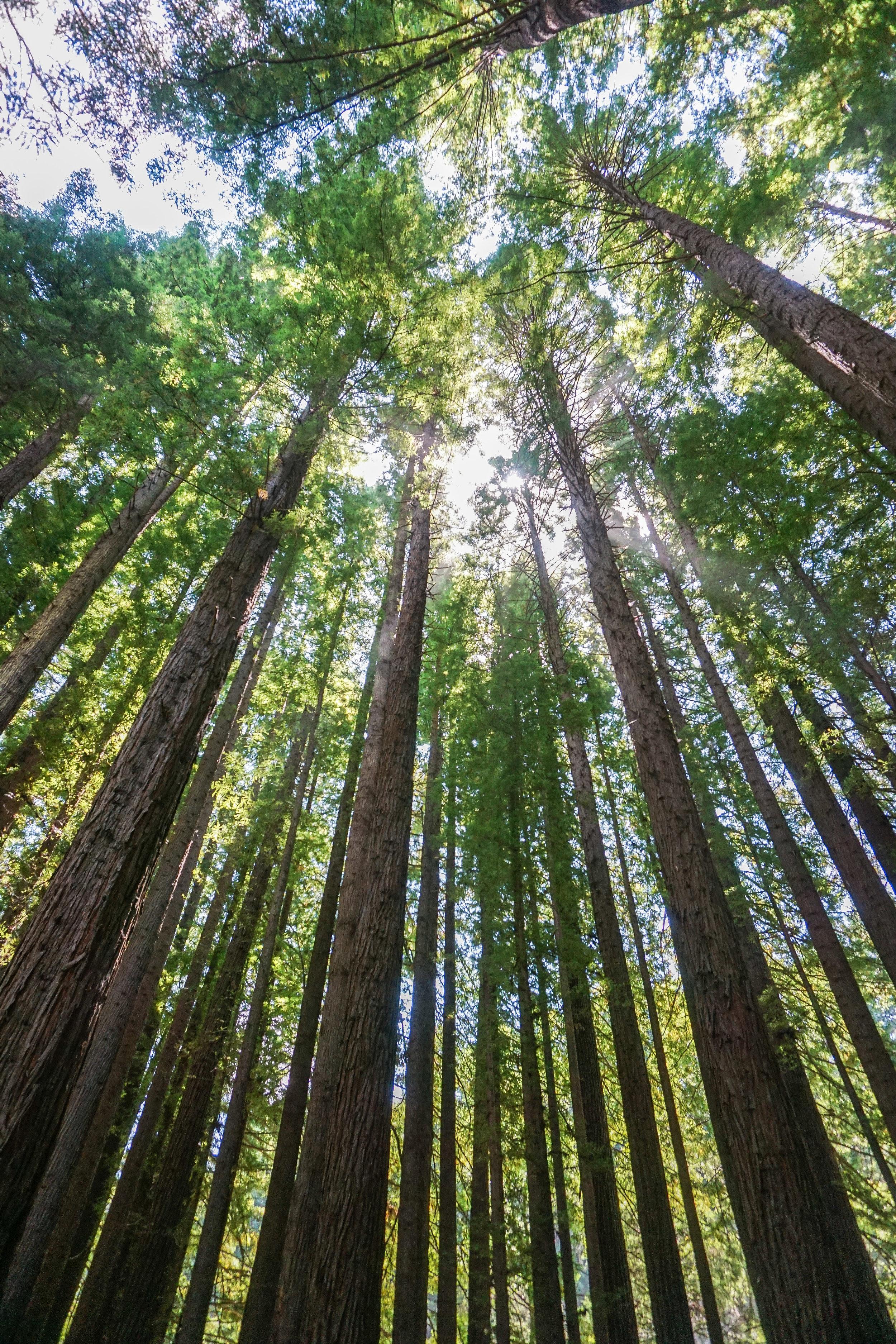 Australia - Great Ocean Road - Beech Forest